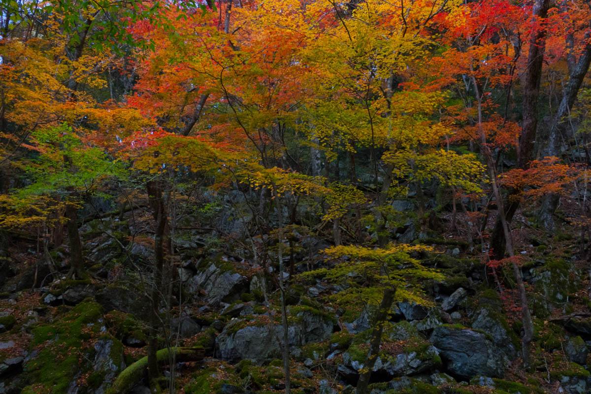 山嶺の紅葉