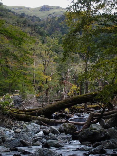 三嶺の登山道