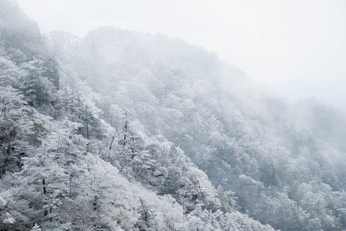 伊予富士の霧氷