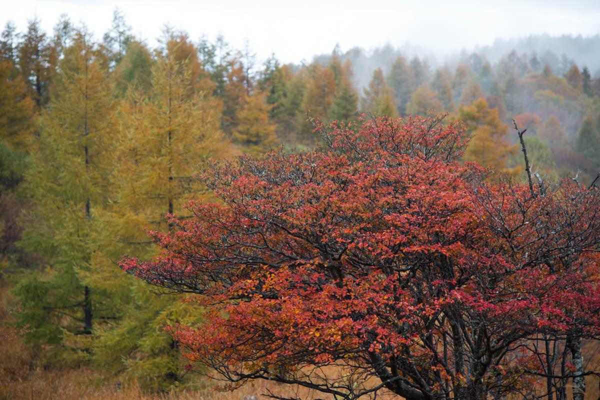 八子ヶ峰の紅葉
