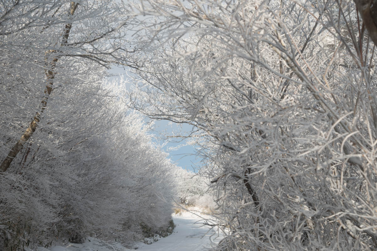 冬の梶ヶ森