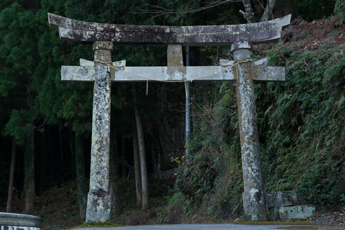 高知県香南市の天神の大杉