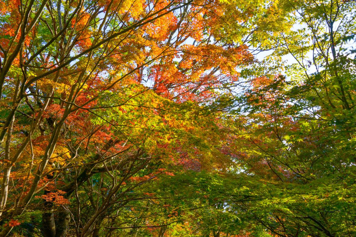 小豆島の紅葉