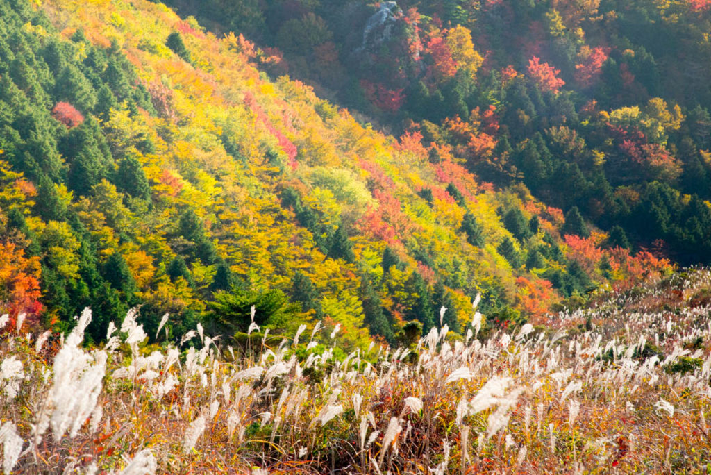 梶ヶ森の紅葉