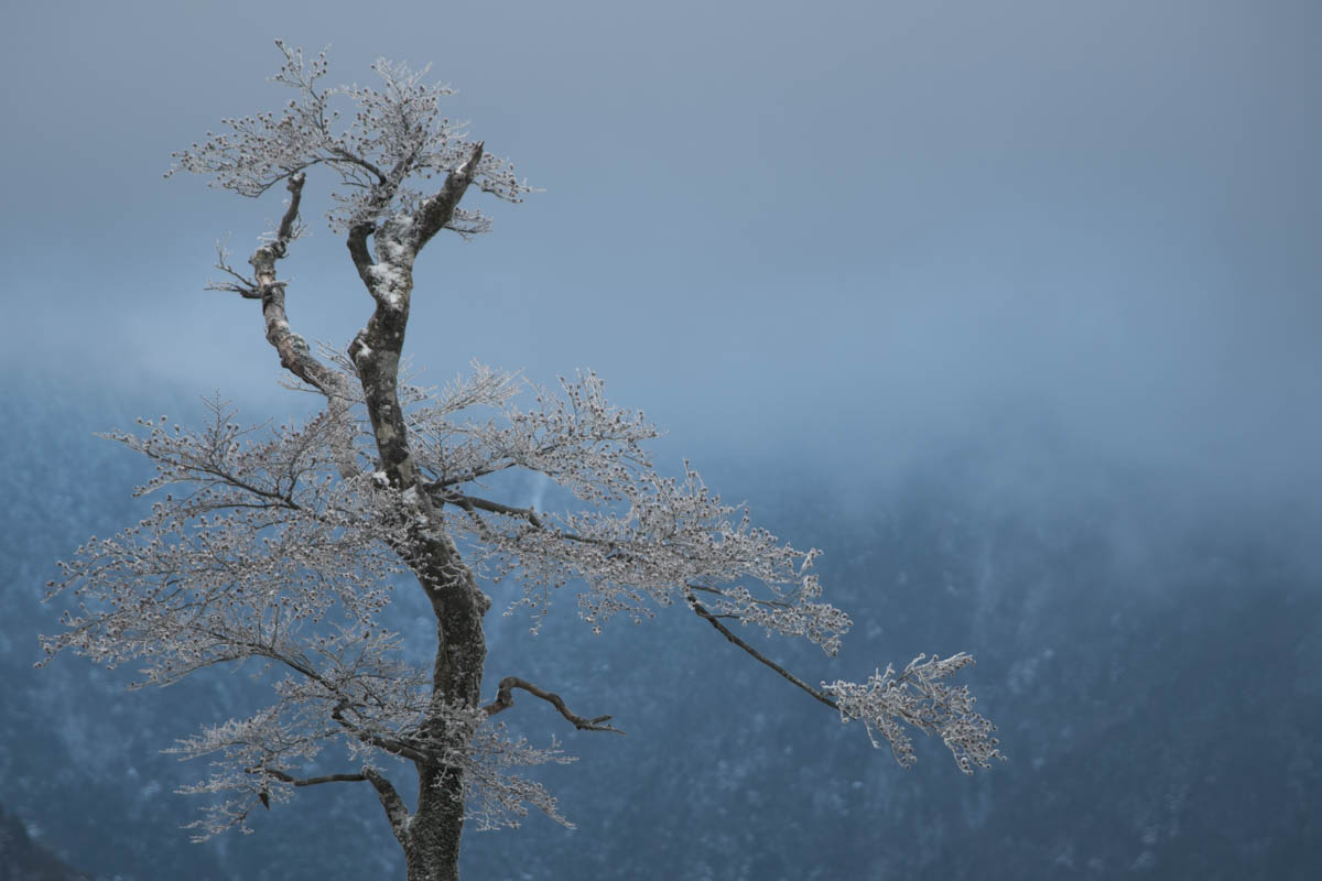 瓶ヶ森林道の霧氷