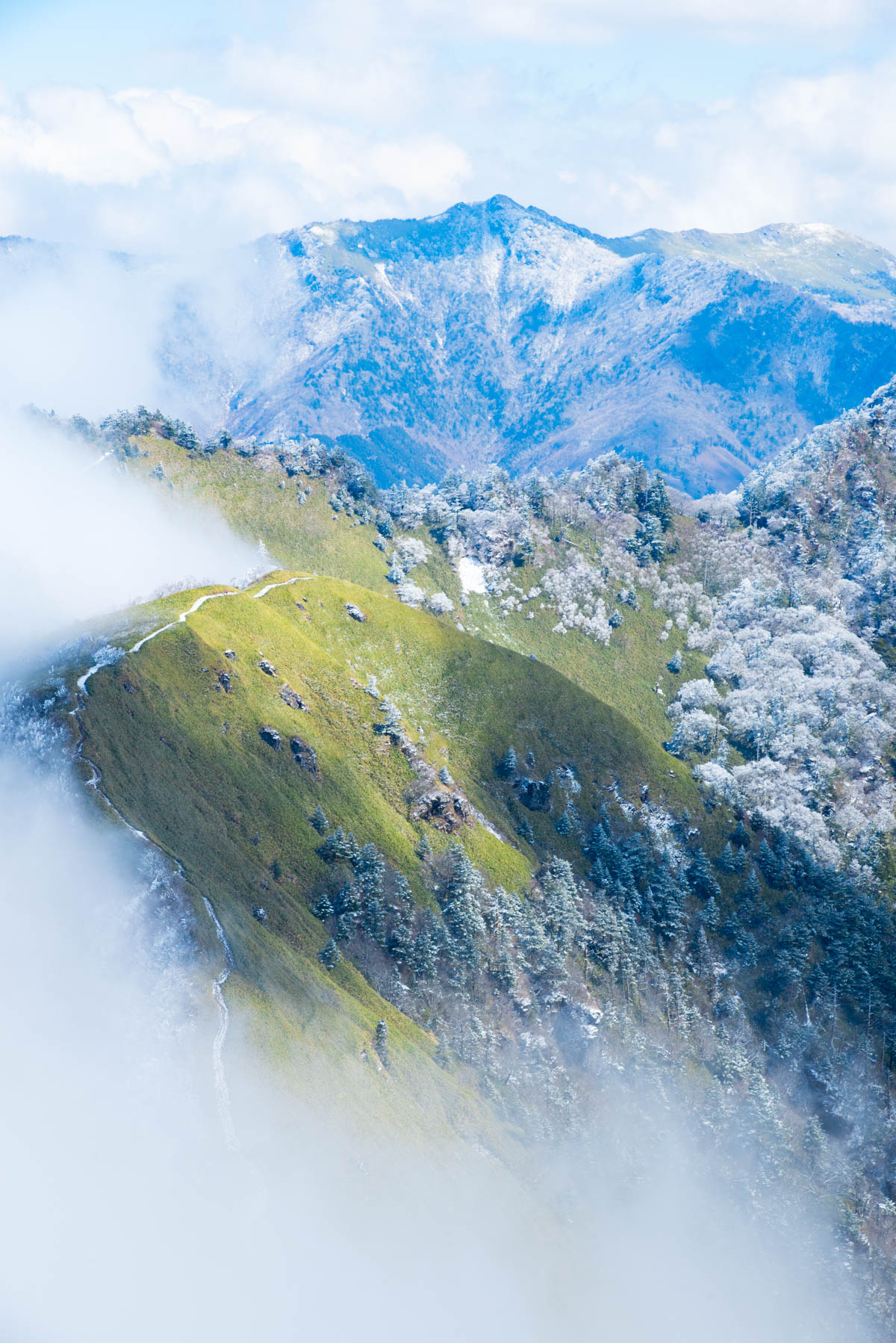 笹原と霧氷の絶景。瓶ヶ森林道ならではの景観