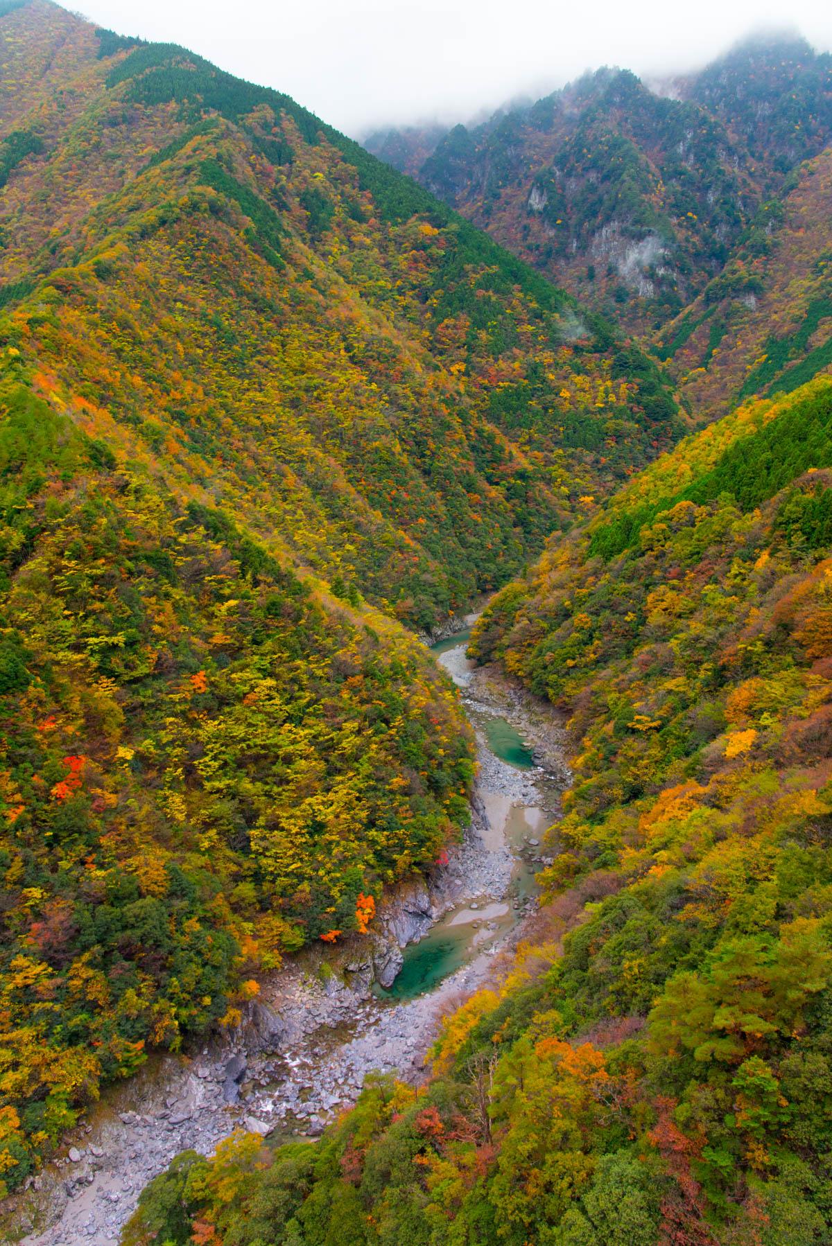 祖谷渓の紅葉