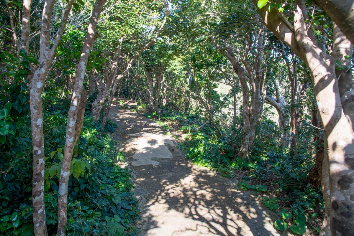 足摺岬の遊歩道