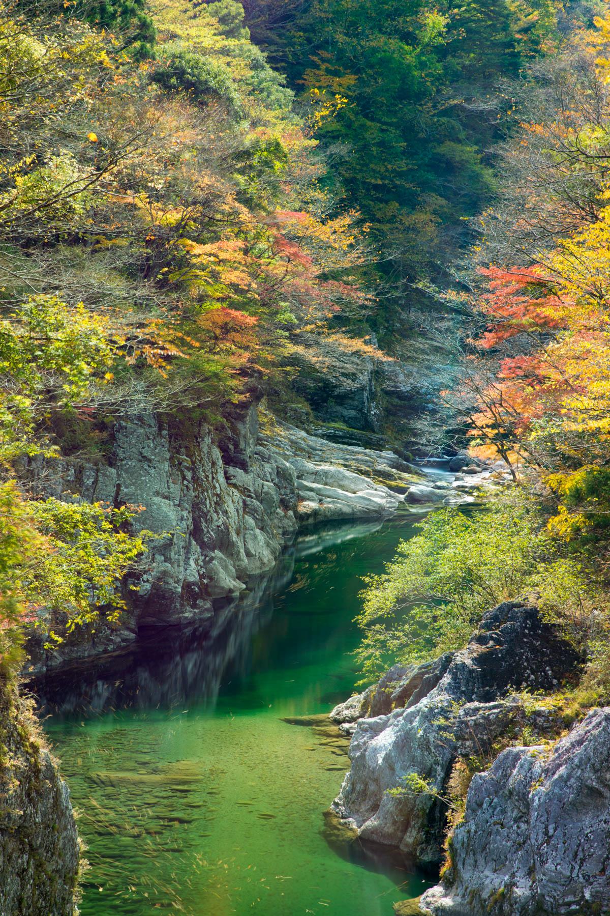 面河渓の紅葉