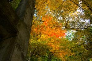 馬路村周辺の紅葉