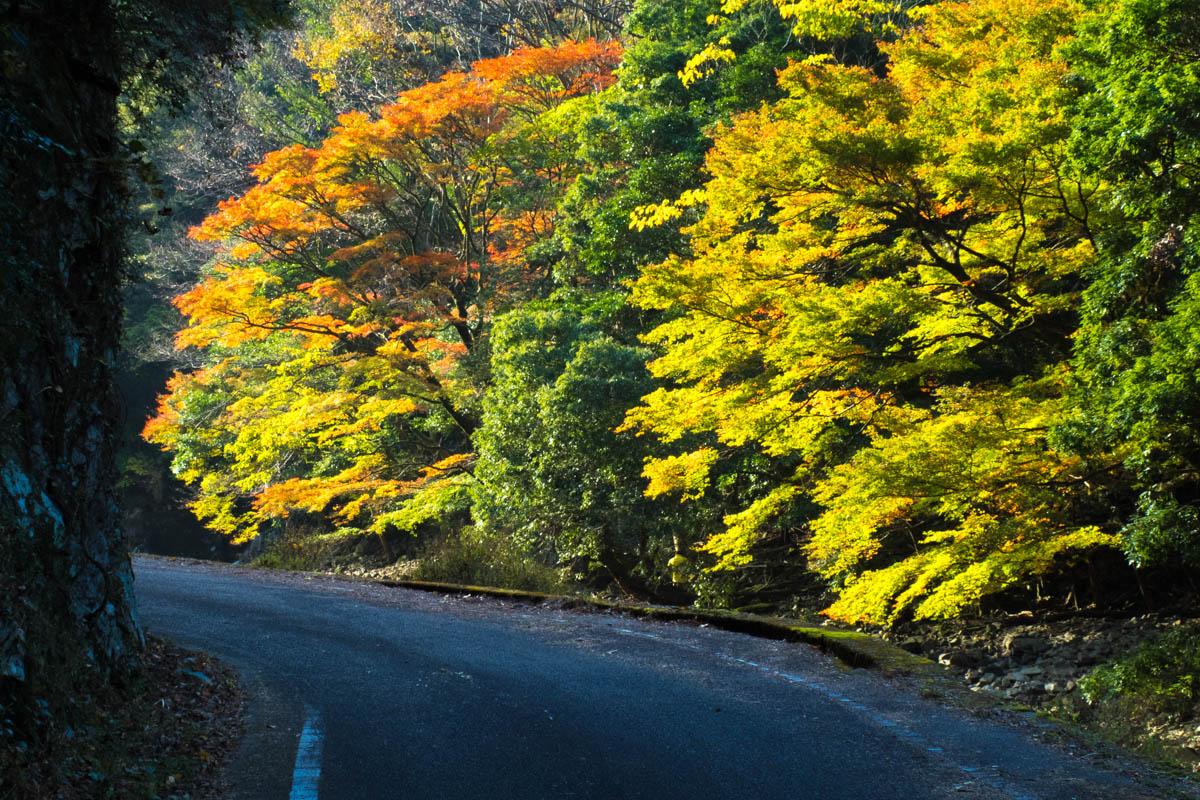 黒尊渓谷の紅葉