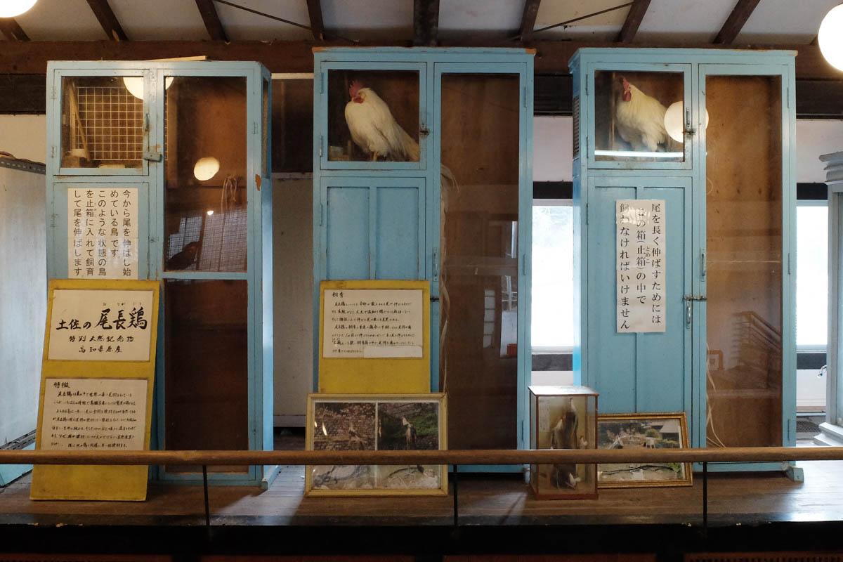 龍河洞の珍鳥センター