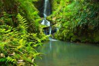 伊尾木洞の滝