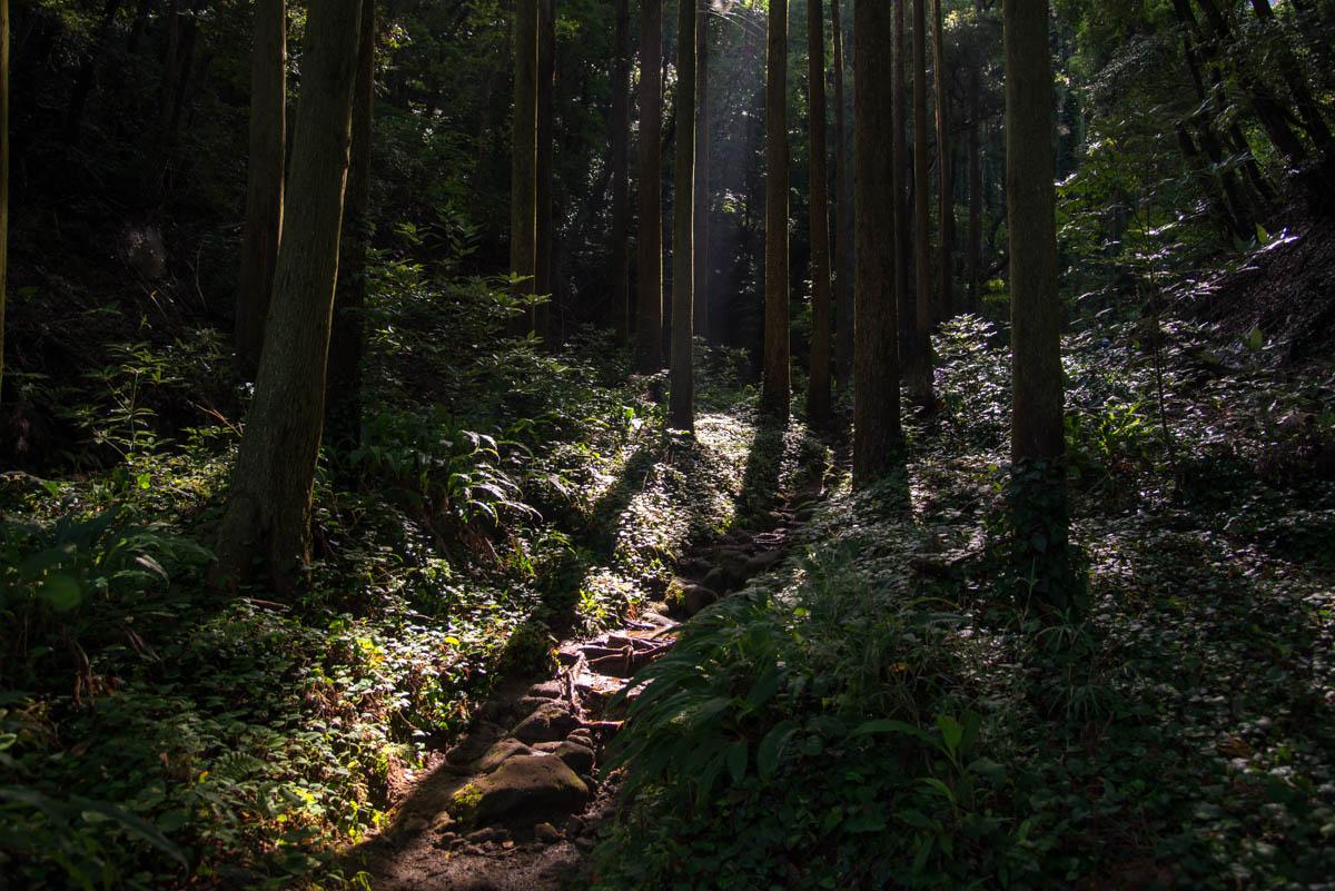 鋸山の登山道