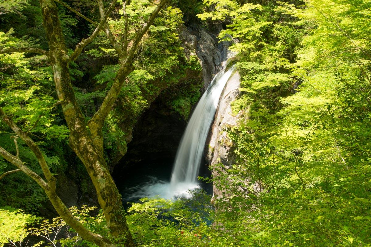 大釜の滝の新緑