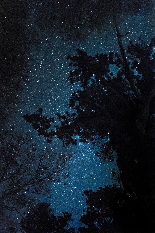 太古の森から見上げた星空