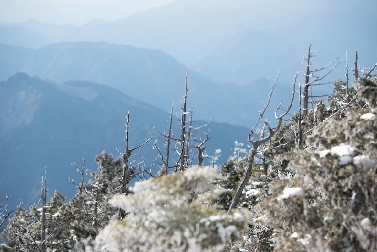 白髪山の立ち枯れの木