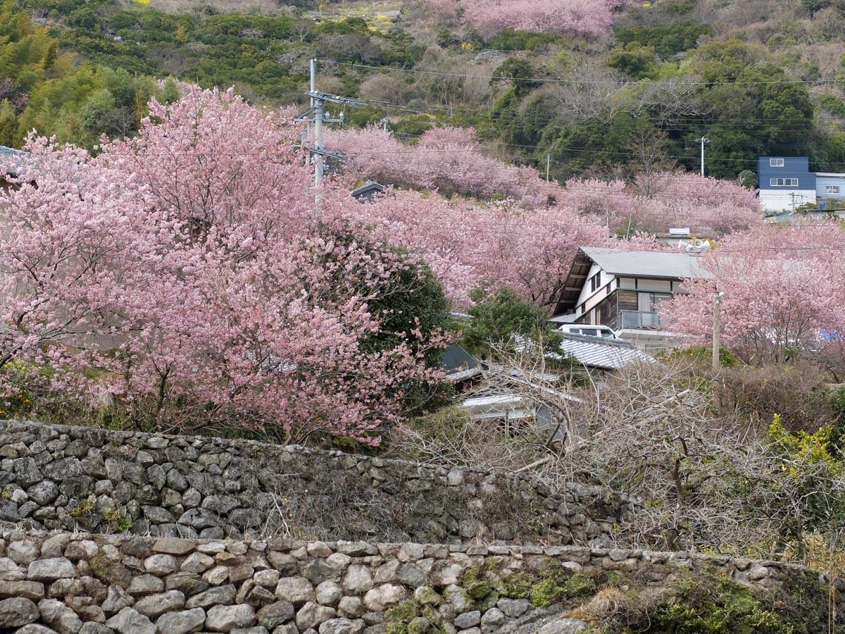 soudayama-yukiwarizakura-2